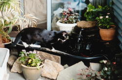 Suki and the Fish Pond